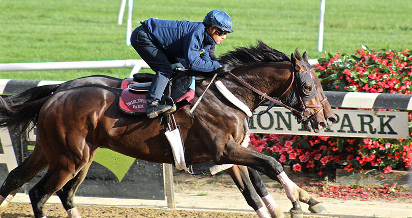 G1 Travers winner Catholic Boy back to work for BC Classic